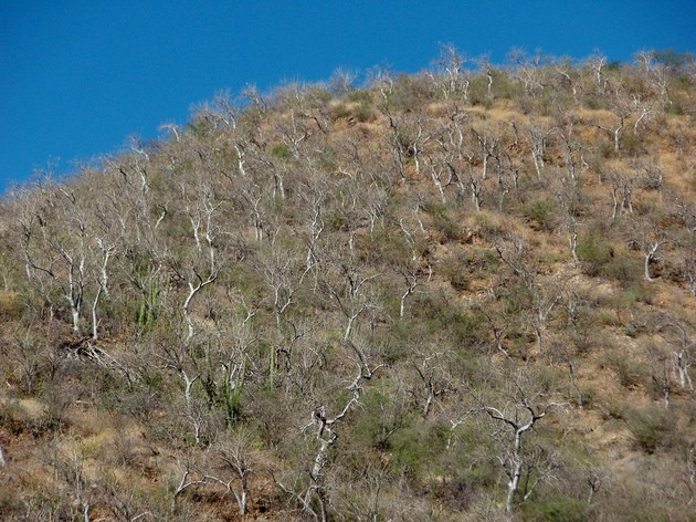 Aridisoles en Mexico