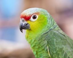 14 animales en peligro de extinción en el mundo