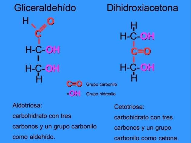Carbohidratos Qué Son Estructura Y Tipos Con Imágenes