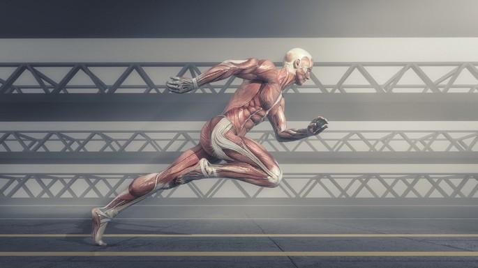 sistema muscular de una persona corriendo