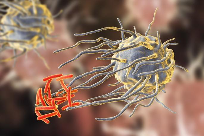 Macrófago atacando a un grupo de bacterias