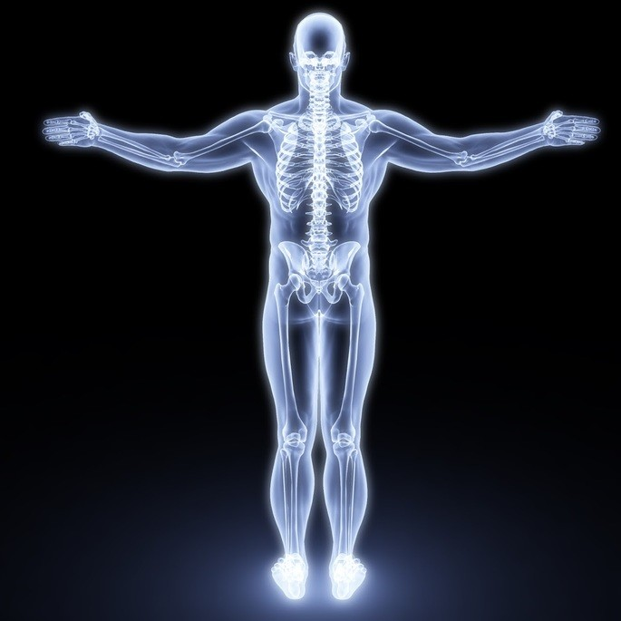 Sistema oseo el esqueleto humano