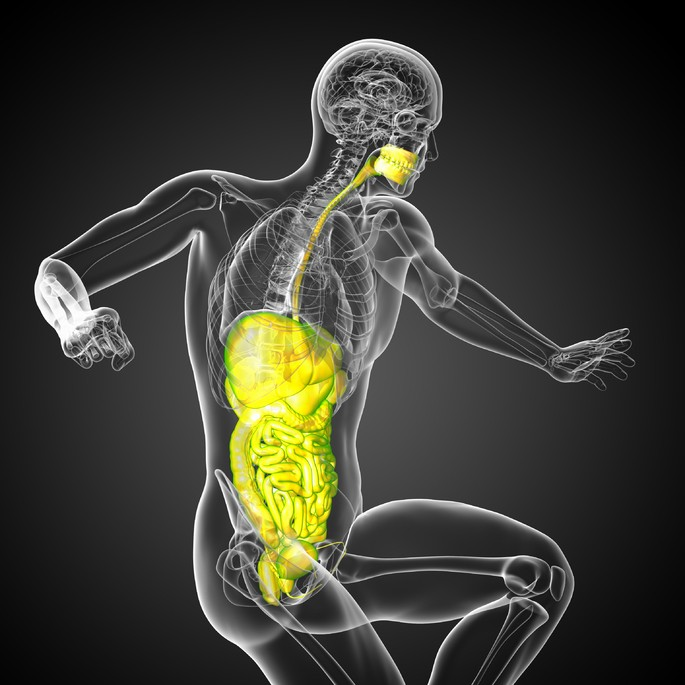 Imagen del sistema digestivo