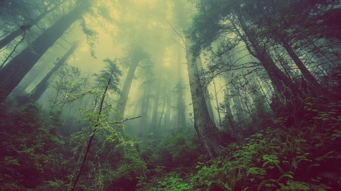 Bosque templado tipos de ecosistemas