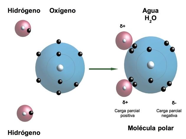 Estructura del Agua