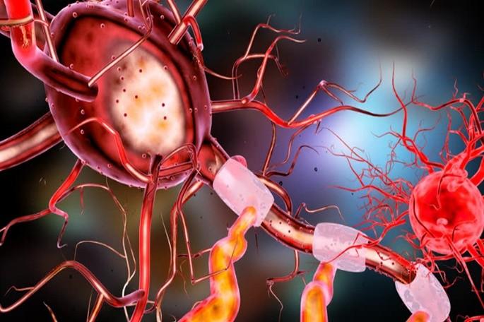 neurona celula animal