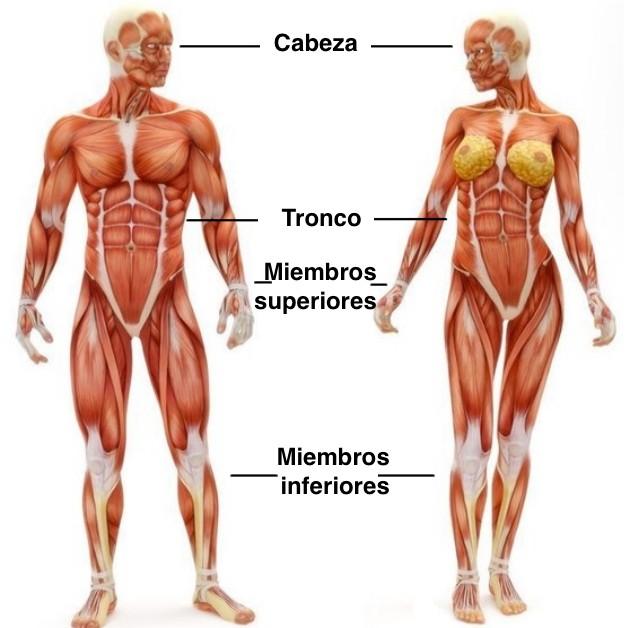 partes del cuerpo humano femenino y masculino