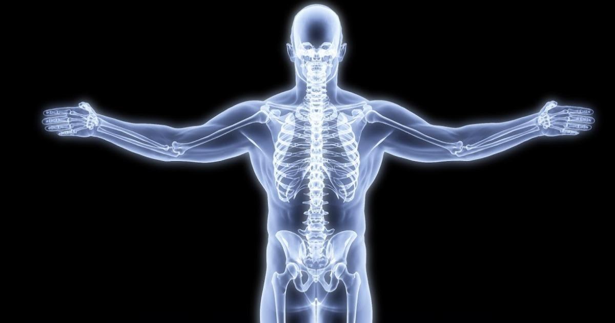 Sistema óseo Estructura Y Función Con Imágenes Toda Materia
