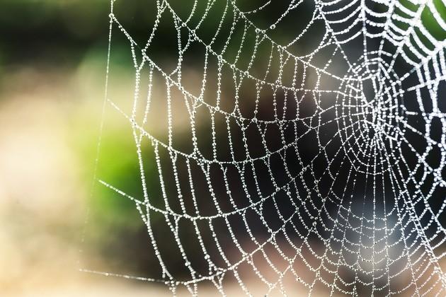 spider silk tension