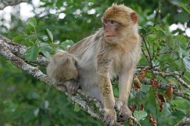 14 animales en peligro de extinción en el mundo (con
